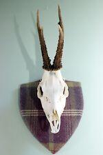 Scottish Roe deer skull mount on MODERN TARTAN