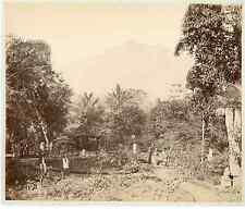 Algérie, jardin d'Essai vintage albumen print.  Tirage albuminé  20x25
