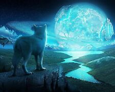 Wolf Poster Beautiful HD Quality Nature Animals 16x20 Inches