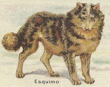 Vintage tobacco cigarette silk - use in crazy quilt - ESQUIMO DOG, HUSKY