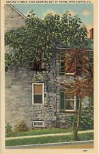 Tree Growing Out Of House in Winchester VA Postcard