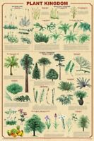 Plant Kingdom Educational Scientific Art Print Poster, 24X36