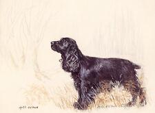 COCKER SPANIEL BLACK DOG ART LIMITED EDITION PRINT