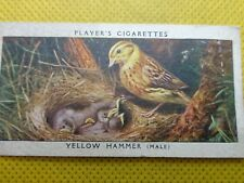 PLAYER'S CIGARETTE CARD ,VINTAGE  , yellow hammer ( male ) .bird & it's young