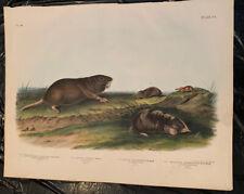 John James Audubon/Bowen Original Imperial Quadruped, Southern Pouched Rat