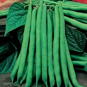 Dwarf french beans tendercrop 10 seeds