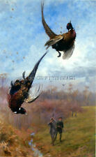 Antique Hunting Repro Photo Print Falling Pair Of Rooster Pheasants