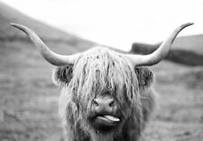 Scottish Highland Cow Wildlife Black & White Quality Canvas Print A3 Large
