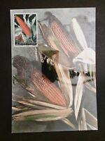 SAN MARINO MK 1958 FLORA MAIS CORN MAXIMUMKARTE CARTE MAXIMUM CARD MC CM c8449