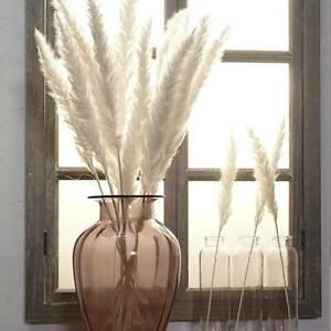 7pc Bulrush Natural Flower Bunch-Artificial Small Dried Pampas Grass-Phragmites