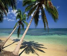 PALM TREES TROPICAL BEACH PARADISE  # 26 HOME DECOR COMPUTER MOUSE PAD 9 X 7