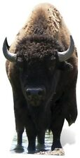 Bison (Buffalo) Lifesize Cardboard Cutout Fun Figure 180cm Tall - At your party