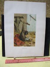 Vintage Print,CHIMP,Prang,Animate Creation,1885,Chromo