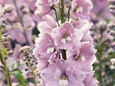 25+ MAGIC FOUNTAINS CHERRY BLOSSOM W/WHITE BEE DELPHINIUM  FLOWER SEEDS /PERENN