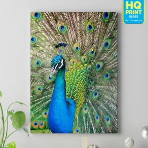 Stunning Peacock Colourful Bird CANVAS Wall Photo Picture Print