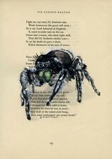 SALE Was £24 Jumping Spider - Original Watercolor Painting on Book Page - 8x11in