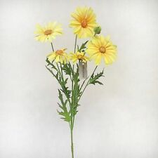 Daisy Outdoors Dried & Artificial Flowers