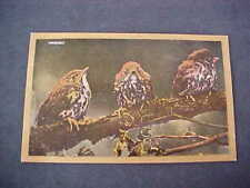 Baby Song Thrushes wild Birds old Postcard