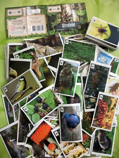 EDEKA Sammelbilder Sticker Unser Wald 10 Stück = 1€ aussuchen von verschiedenen