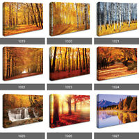 Red Autumn Leaves Forest Trees Sunset Waterfall Photo Wall Canvas Landscape RMC