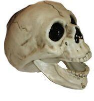 "5.5"" Deluxe Halloween Plastic Head Bone Skull Bone Model, Mouth Articulated,"