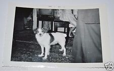 WOW Vintage 1957 Cute Little Girl & Dog Black & White Photograph Old Television