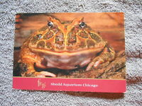 VINTAGE -  POST CARD -  HORNED TOAD / SHEDD AQUARIUM CHICAGO