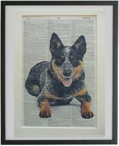 Blue Heeler Print No.828, australian cattle dog print, librarian gifts