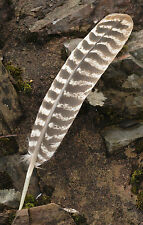 Large Turkey Smudging Feather
