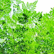 Bäume mit mittlerem Wasserbedarf für tropisches Klima