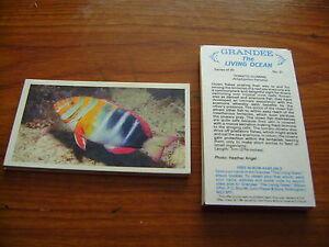 Grandee The Living Ocean Full Set By John Player & Sons