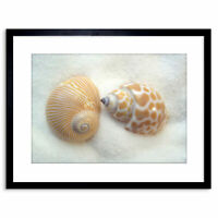 Photo Seashells Beach Sand Summer Framed Print 9x7 Inch