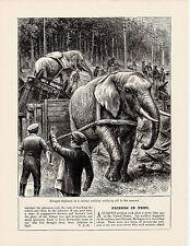 CIRCO Elefanti Escape vicino Durand, Michigan nel disastro ferroviario. scarse stampa 1904