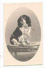 BM979 Carte Photo vintage card RPPC Animaux Chien portrait sur table Coker
