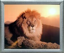 Lion King (Sunset) Big Cat Wild Animal Wall Decor Silver Framed Picture (20x24)