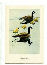 Vintage Restaurant Menu TIDEWATER INN Easton MD 1952 Canada Goose dinner