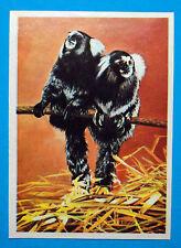 Figurina Panini-ANIMALI DI TUTTO IL MONDO 1965-n.49-UISTITI-rec