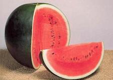 Watermelon Sugar Baby (Citrullus lanatus) NON GMO Heirloom  25 Seeds Free Ship