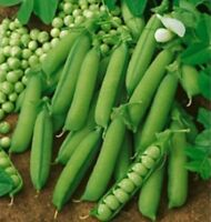 Early Alaska Pea Seed - Heirloom English Bush Peas Garden Seeds (½oz to 1LB)