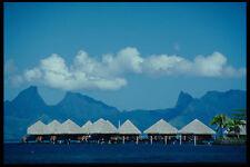 469007 MOOREA da Maeva BEACH TAHITI A4 FOTO STAMPA
