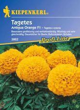 Kiepenkerl - Tagètes Antigua Orange 3862 Grand Résistant aux Intempéries