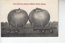 Apple Exaggeration the Kind They Raise in West Grove Iowa