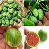 10pc Cucamelon Mini Watermelon Seeds Red Miniature Fruit Plant Home Garden Decor