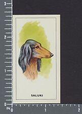 Saluki dog Dogs Heads by G.P. Tea card #7