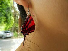 """REAL Monarch Butterfly Wings Earrings """"Chain Swordtail"""" Jewelry 925 sterling!"""