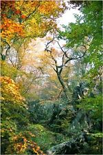 BEAUTIFUL NATURE SCENE POSTER fall tress foliage GREEN YELLOW RED 24X36 new