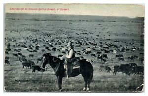 1909 Grazing on an Oregon Cattle Range at Sunset Postcard *6S(3)29