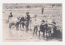 RPPC,Ceylon,Water Buffaloes Ploughing Paddy Fields,Ethnic,c.1909