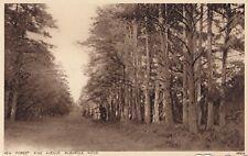 Postcard - New Forest - Pine Avenue. Rushpole Wood