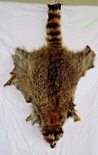 "Raccoon Fur Hide Pelt Soft 32"" Medium Vintage"